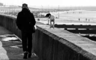 Выгул собак на придомовой территории: что говорит закон