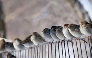 Собрание ЖСК – это что такое, нюансы общего собрания членов дома
